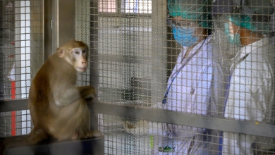 Photo of Thailand Conducts Tests On Monkeys In Search Of COVID-19 Vaccine