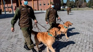 Photo of Chile Training Dogs to Sniff Out COVID-19