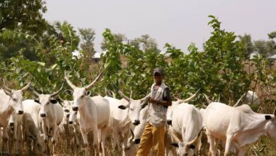 Photo of Miyetti Allah Begins Registration For Herdsmen In Ogun State